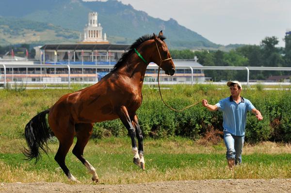 кататься на лошадях в Пятигорске