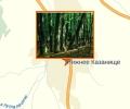 Казанищенский лесной массив