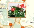 Где лучше всего купить комнатные цветы в Пятигорске?